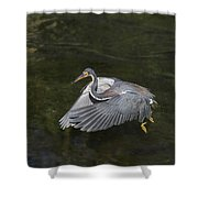 Fishing Tri Colored Heron Shower Curtain