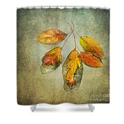 Five Autumn Leaves Shower Curtain