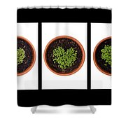Five Days On Black Shower Curtain