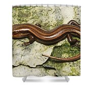 Five-lined Skink Shower Curtain