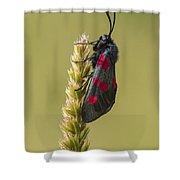 Five Spot Burnet Shower Curtain