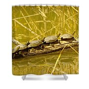 Five Turtles On A Log Shower Curtain