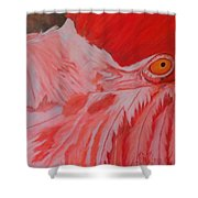 Flamboyant, Flamingo   Shower Curtain