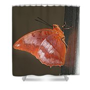 Flame-bordered Charaxes Butterfly #3 Shower Curtain