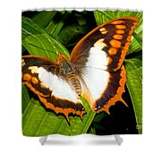 Flame Bordered Charaxes Butterfly Shower Curtain