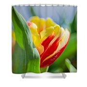 Flame Leaf Tulip Shower Curtain
