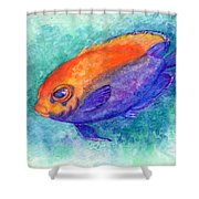 Flameback Angelfish Shower Curtain
