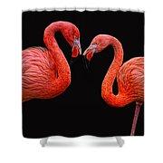 Flamenco ... Baby Shower Curtain