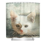 Flamepoint Siamese Kitten Shower Curtain