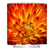 Flaming Dahlia - Paintography Shower Curtain