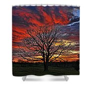 Flaming Oak Sunrise Shower Curtain