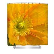 Flaming Yellow Poppy  Shower Curtain
