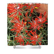 Flaming Zion Paintbrush Wildflowers Shower Curtain