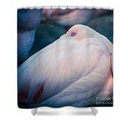 Flamingo 1b - Square Shower Curtain