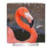 Flamingo Close Up Shower Curtain