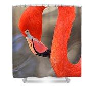 Flamingo Curves Shower Curtain