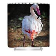 Flamingo In Fuchsia Shower Curtain