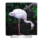 Flamingo Drinking Water Shower Curtain