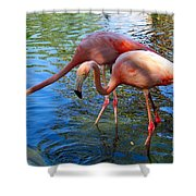 Flamingo Duo Shower Curtain