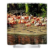 Flamingo Family Reunion Shower Curtain by Karen Wiles