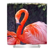Flamingo In The Wild Shower Curtain
