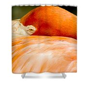 Flamingo Napping Shower Curtain