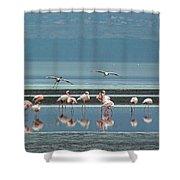 Flamingo On Lake Nakuru Shower Curtain