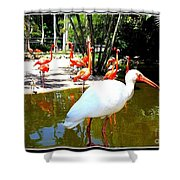 Flamingo Park Florida Shower Curtain