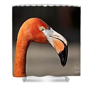 Flamingo Portrait Shower Curtain