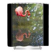 Flamingo Reflected Shower Curtain