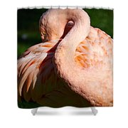 Flamingo Twist Shower Curtain