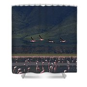 Flamingos  #6590 Shower Curtain