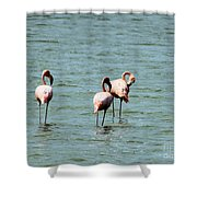 Flamingos Gathering Together Shower Curtain