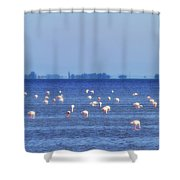Flamingos In The Pond Shower Curtain