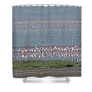 Flamingos On Lake Magadi Shower Curtain