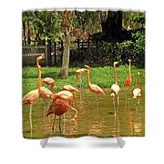 Flamingos Wading Shower Curtain