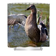 Flap Those Wings Shower Curtain