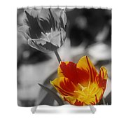 Flashy Tulips Shower Curtain