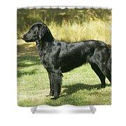Flat-coated Retriever Dog Shower Curtain