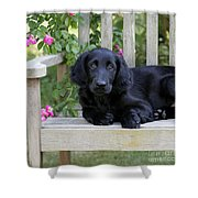 Flat-coated Retriever Puppy Shower Curtain