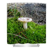 Flat Topped Mushroom Shower Curtain