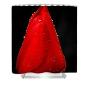 Floating Red Tulip Shower Curtain