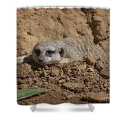 Flatout Shower Curtain
