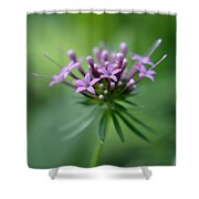 Flattering Compliments Shower Curtain