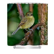 Flavescent Flycatcher Shower Curtain
