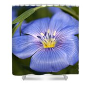 Flax Flower Shower Curtain