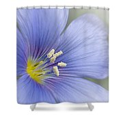 Blue Flax Close-up Shower Curtain