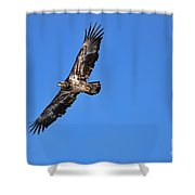 Fledgling Bald Eagle 5048 Shower Curtain