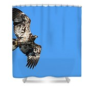 Fledgling Bald Eagle 5078 Shower Curtain