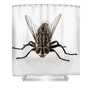 Flesh Fly Isolated Shower Curtain